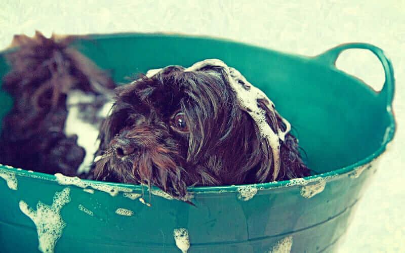 Dog grooming coral springs
